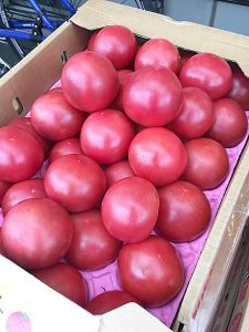 kyoto-office7maeda-tomato