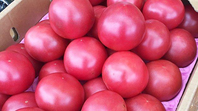 office7maeda-tomato