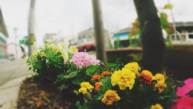 office7maeda shop flowers